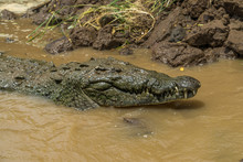 Costa Rica Crocodile Feeding R...