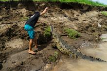 Costa Rica Crocodile Feeding Rio Tarcoles