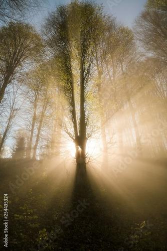 światło słoneczne oświetlające forest.trabzon