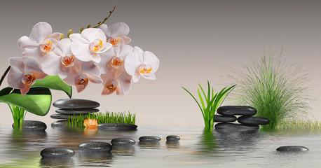 Fototapeta Kwiaty Wandbild mit Orchideen, Steinen im Wasser