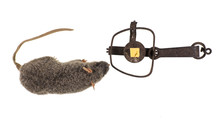 Hunting Trap For Killing Rats