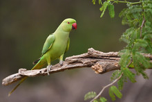 Green Parrot Sitting In Tree