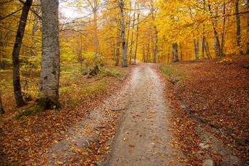 jesień piękna droga w lesie