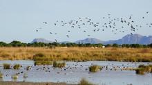 Birds Albufera Nature Reserve Mallorca Spain January