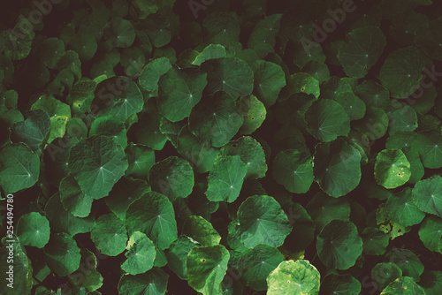 Green Plant Texture Background
