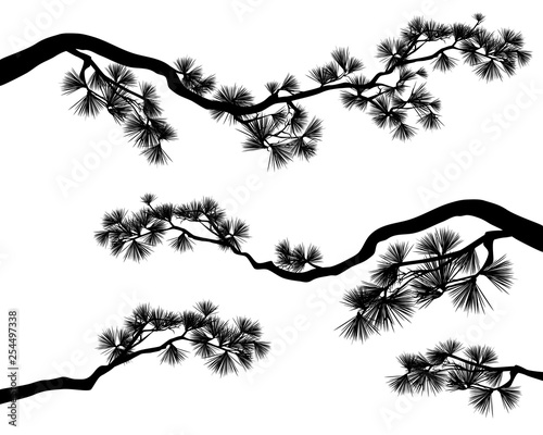 Fotografia long elegant pine tree branches - black and white conifer tree vector silhouette