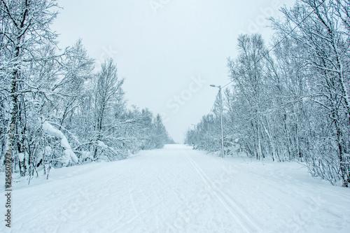 Photo sur Toile Bleu clair Une forêt enneigée à Tromso en Norvège du Nord