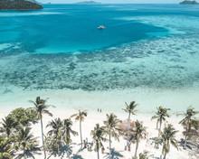 Coconut Trees Facing Ocean