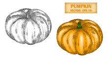 Vector Image Of A Hand-drawn Pumpkin Black White And In Color. Ink Or Pen Sketch. Editable Stroke. EPS 10.