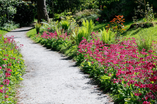 A Gravel Garden Path Leading Through Ferns And Pink Flowers Buy