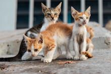 Three Tabby Kittens On Gray Su...
