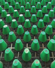 Green Plastic Cup Lot