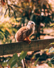 Brown Monkey On Wooden Fence