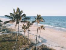 Palm Trees Near Ocean