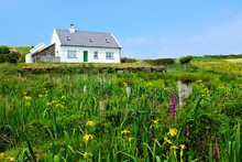 Small White House In The Countryside Of Ireland With Lush Green Front Yard Of Wild Flowers
