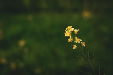 Yellow And Green Petaled Flower