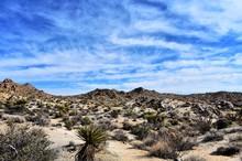Plants On Desert