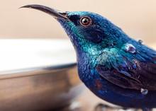 Close-up Photography Of Blue Hummingbird
