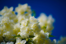 Selective Focus Photography Of...