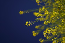 Yellow And Blue Petaled Flowers