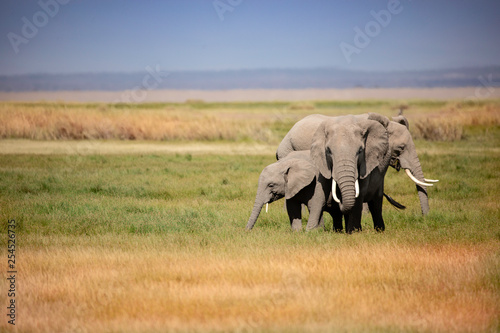 Photo  A group of elephants gathered tightly together in the grassland of Africa