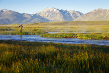 One Man Fly Fishing On The Owens River At Sunrise With The Sierra Nevada Mountains In The Distance