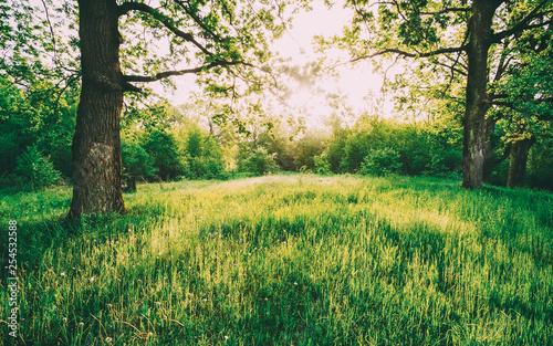 Fotografia, Obraz  Summer Sunny Deciduous Forest Trees And Green Grass