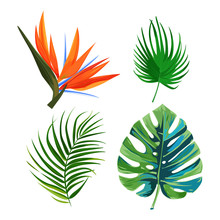 Palm Leaves, Flower Bird Of Paradise Strelitzia And Monstera Leaf. Isolated Plants On White Background.