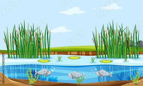 Fotografija Fish pond nature scene