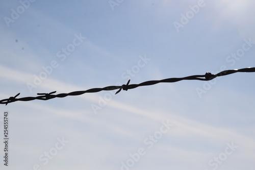 Fotografie, Obraz  Barbed Wire