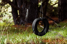 Tyre Swing Hanging Quietly In Forest.