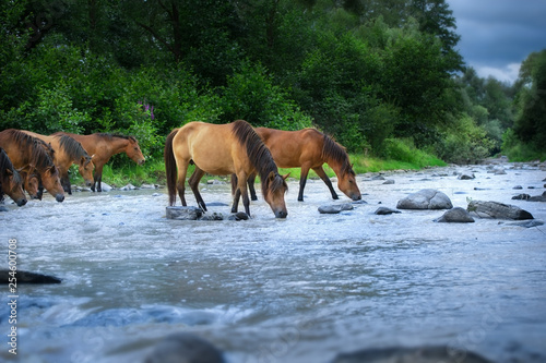 Fotografie, Obraz  Horses drink in river
