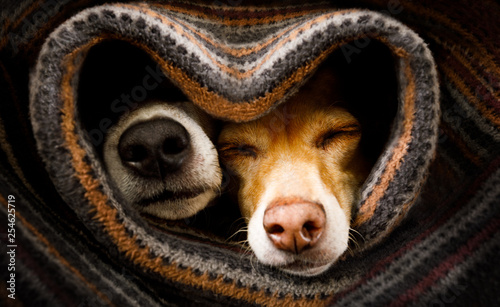 Tuinposter Crazy dog dogs under blanket together