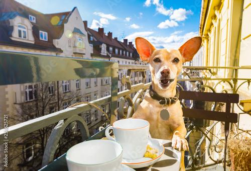 Foto op Aluminium Crazy dog dog having a coffee break