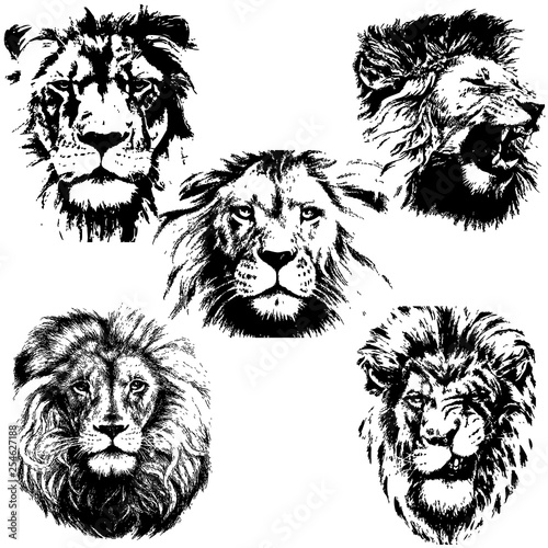 Lion silhouette collection. Vector illustration Wall mural