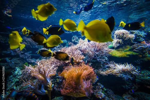 podwodny krajobraz rafy koralowej z kolorowych ryb