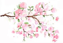 Watercolor Cherry Branch In Spring Color