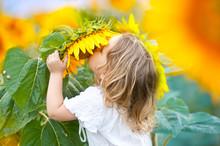 Baby Girl In Sunflowers Field.