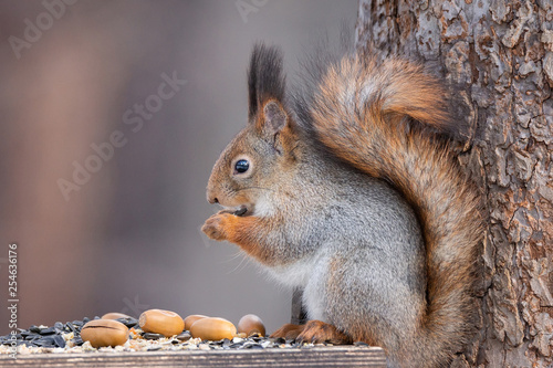 Fotobehang Eekhoorn Squirrel tree in winter