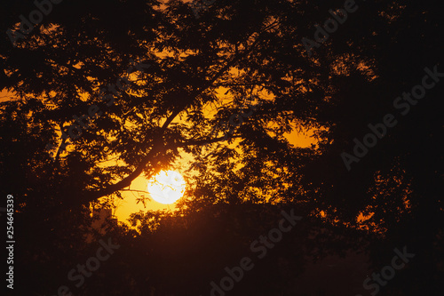 Fotografie, Obraz view on sunset through branches of trees