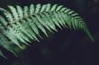 Leinwandbild Motiv Leaves green Dark Leaf detail In the natural forest