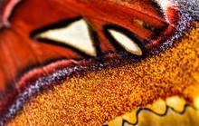 Flügel Detail Eines Tropischen Schmetterling, Gezielter Fokus, Gesicht