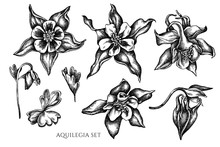 Vector Collection Of Hand Drawn Black And White Aquilegia