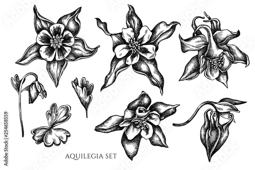 Photo Vector collection of hand drawn black and white aquilegia