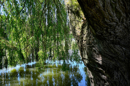 Saule Posters Wall Art Prints Buy Online At Europosters