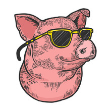 Pig Animal In Sunglasses Color Sketch Engraving Vector Illustration. Scratch Board Style Imitation. Black And White Hand Drawn Image.