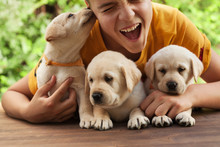 Teenager Boy Holding His Cute Labrador Puppies, Having Fun  And Enjoy Their Company