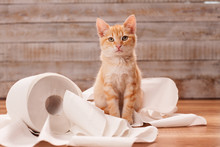 Cute Orange Tabby Kitten Sitti...