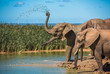 canvas print picture - Elephant's herd at water hole, South Africa