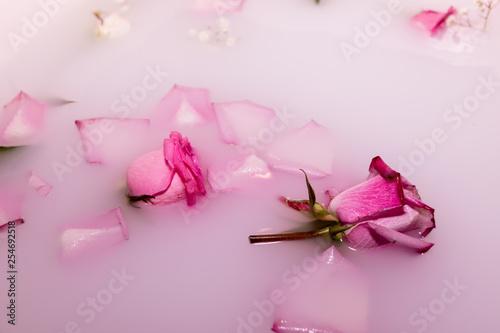 Foto Fleur dans l'eau